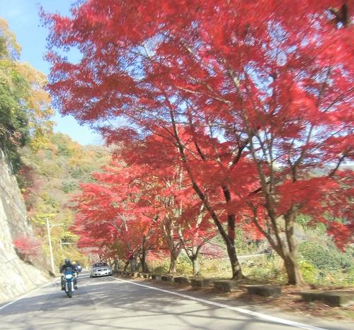 maesimasyokudo-1411-019b.jpg