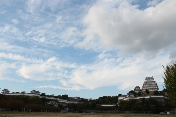 shimeji04.jpg