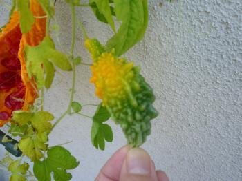 庭に花たち