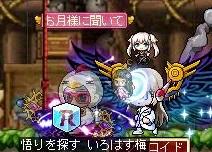 Maple131213_161202.jpg