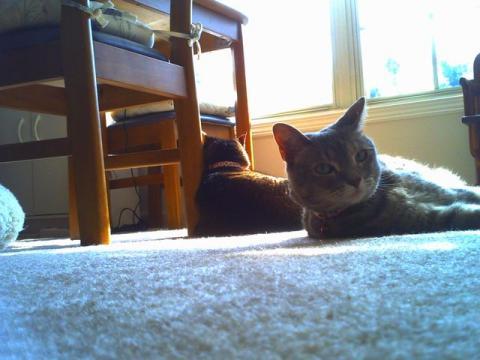 ネコノでネコら