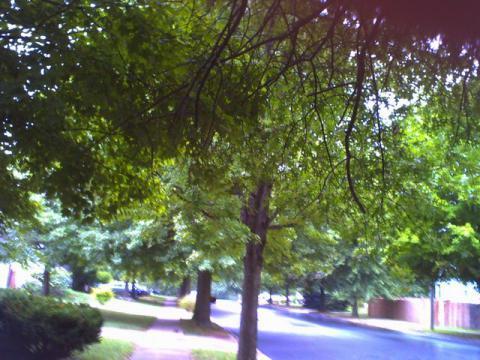 木からぼとぼと雨粒が