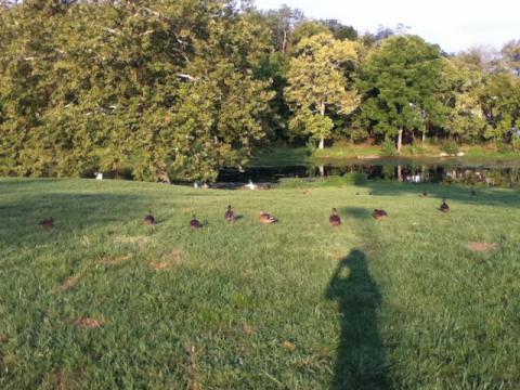 2012年8月9日@Willow Oak Park