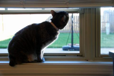 窓を開ければ