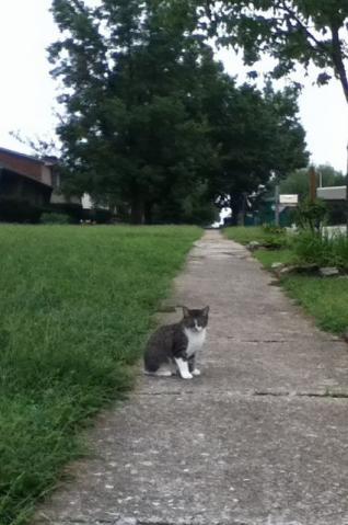 向こうから歩いてきたネコ