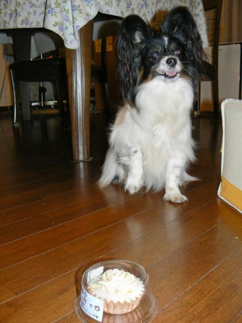 マリィ9歳のお誕生日♪-20080416