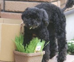 草たべてますかぁ!アトム