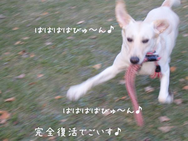 asa2_20141126215641f62.jpg