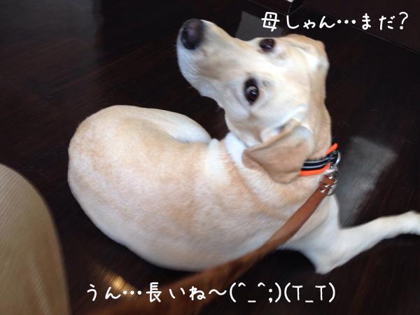 b1_201411172119415dc.jpg