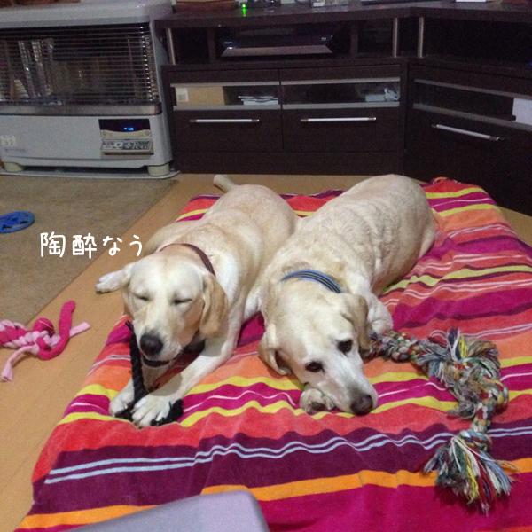 bed1_20141024215825ca1.jpg