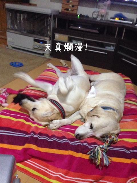 bed2_20141024215826d94.jpg