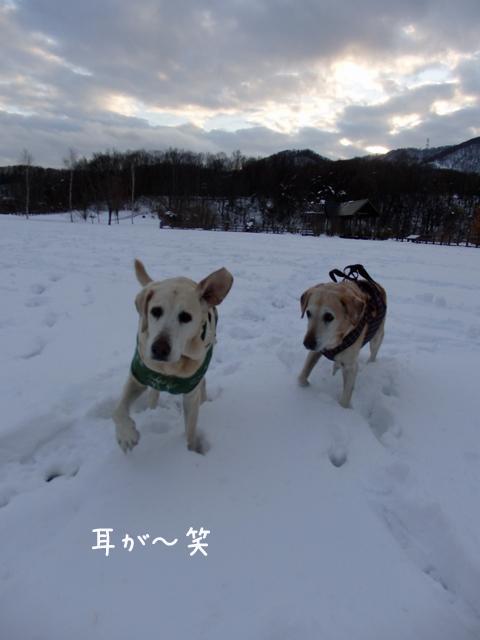 marumimi_20141117213112cbe.jpg