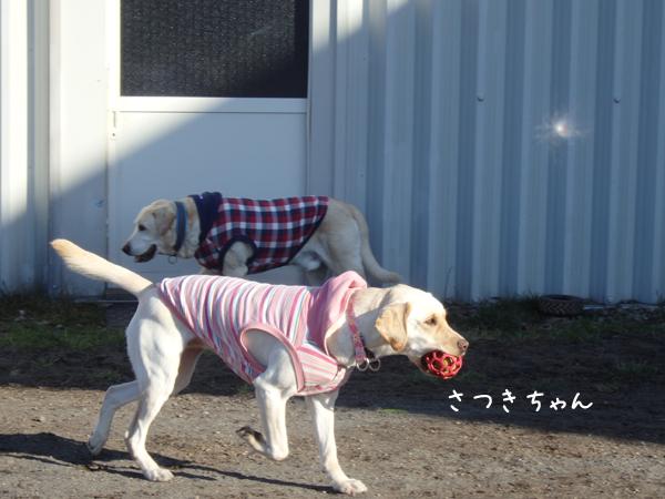 satuki_20141105232017939.jpg