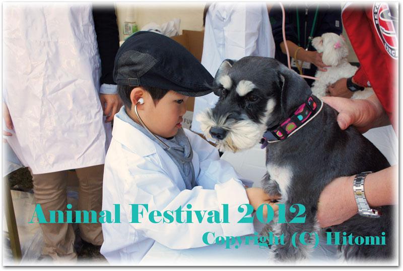 動物フェスティバル