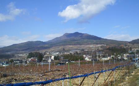 ぶどう畑からの高社山(25.12.1)
