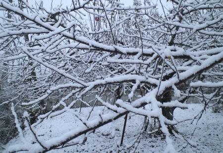 リンゴ畑は真っ白(25.12.12)