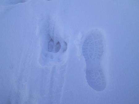 だれの足跡?(25.12.31)