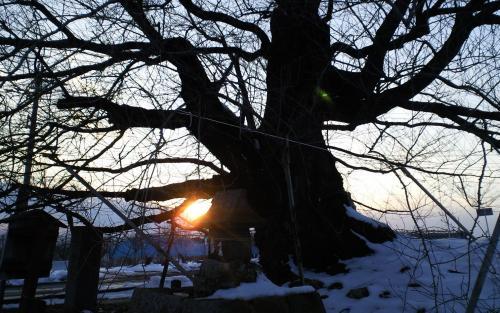 千歳桜から今年最後の落日(25.12.31)