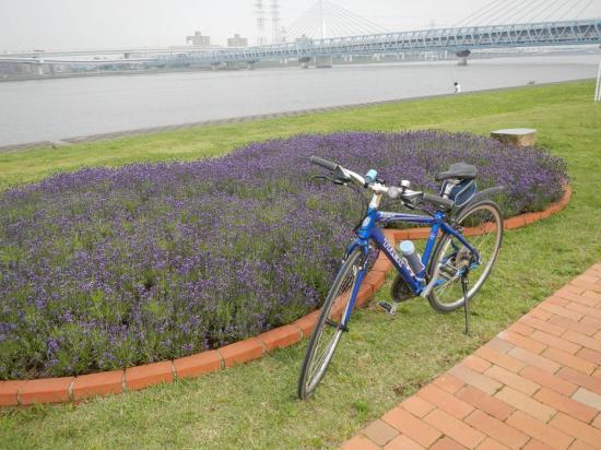 サイクリング6-17 (11)