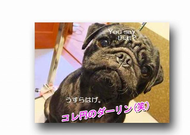 kc_20120930123743.jpg
