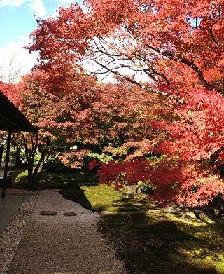 茶室の前の紅葉