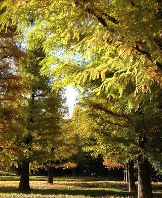 綺麗な黄色に紅葉していた木