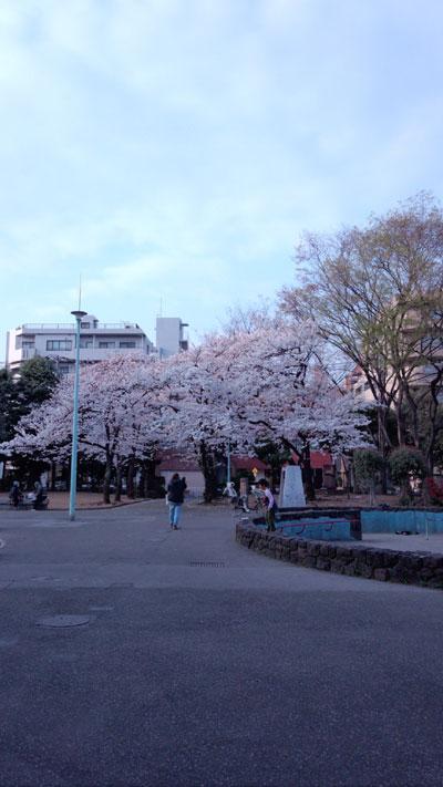 20130323sakura2
