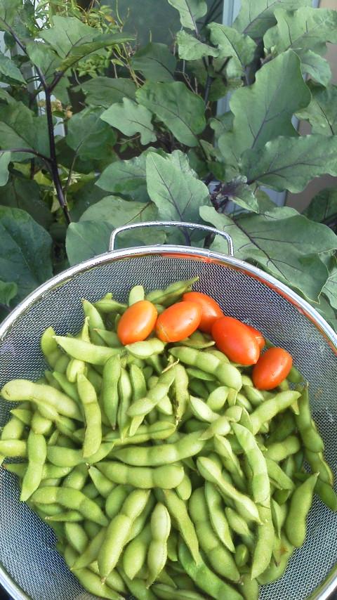 枝豆 トマト