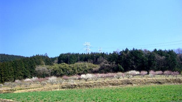 20130316-2.jpg