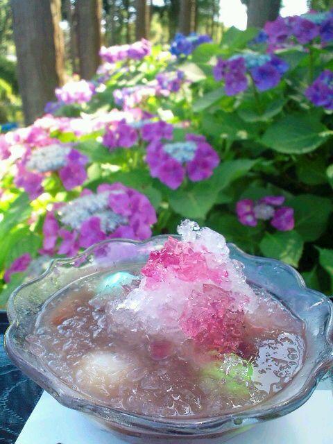 2011年 紫陽花と氷ぜんざいと