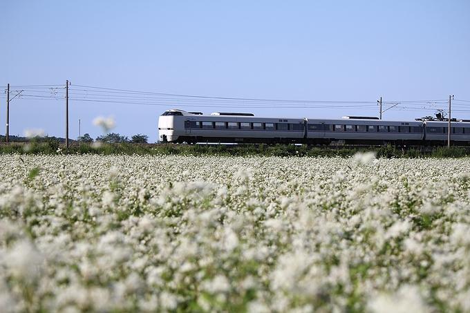 ソバ畑とJR北陸線特急