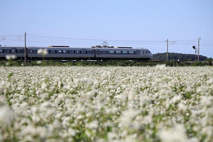ソバ畑とJR北陸線特急 石川県加賀市