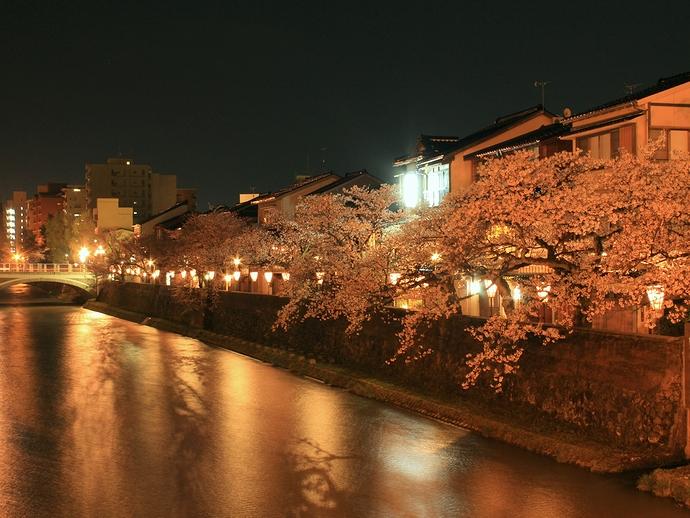 主計町茶屋街の夜桜と浅野川の流れ