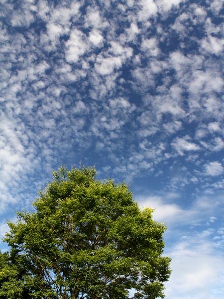 秋の空 羊雲