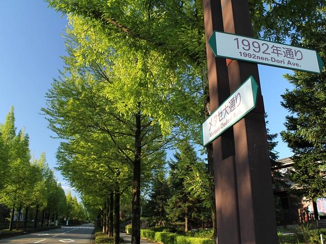 金沢市太陽が丘のメタセコイア並木