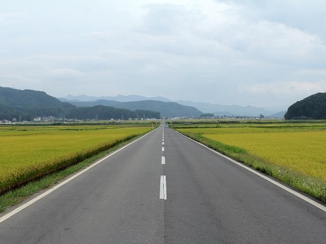佐久市内 稲穂が染まる直線道路