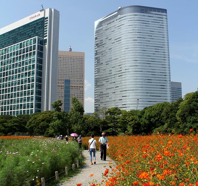 浜離宮恩賜庭園のキバナコスモスと高層ビル群
