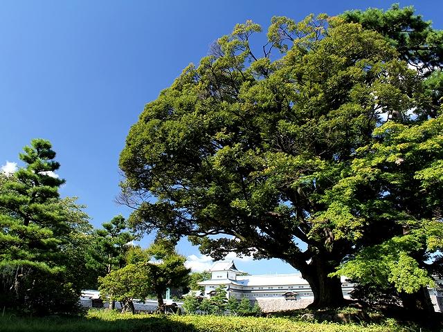 金沢城公園 緑の樹木と橋爪門続櫓