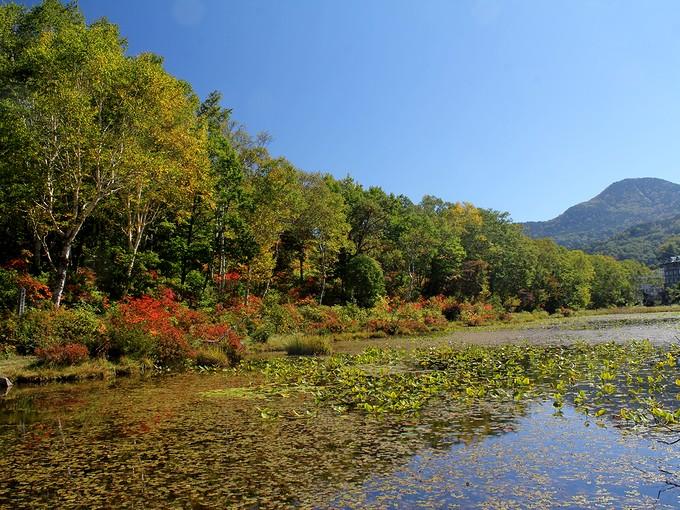 志賀高原 蓮池の紅葉(染まり始め)