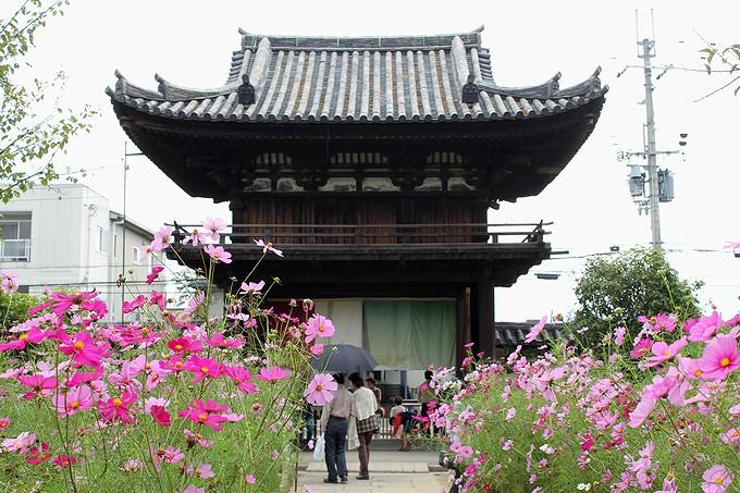 奈良のコスモス寺 般若寺 国宝の楼門