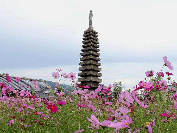 奈良のコスモス寺 般若寺 十三重石宝塔