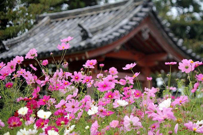 奈良のコスモス寺 般若寺 鐘楼