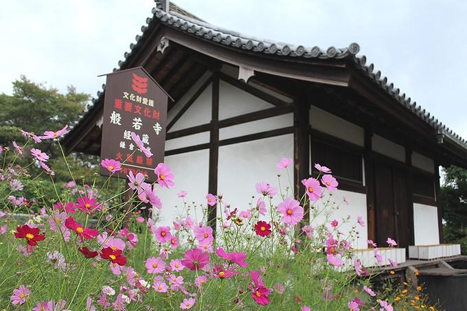 奈良のコスモス寺 般若寺 経蔵