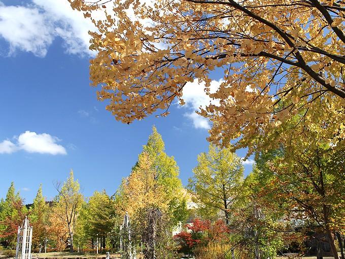 金沢市太陽が丘 秋色が増えてきた