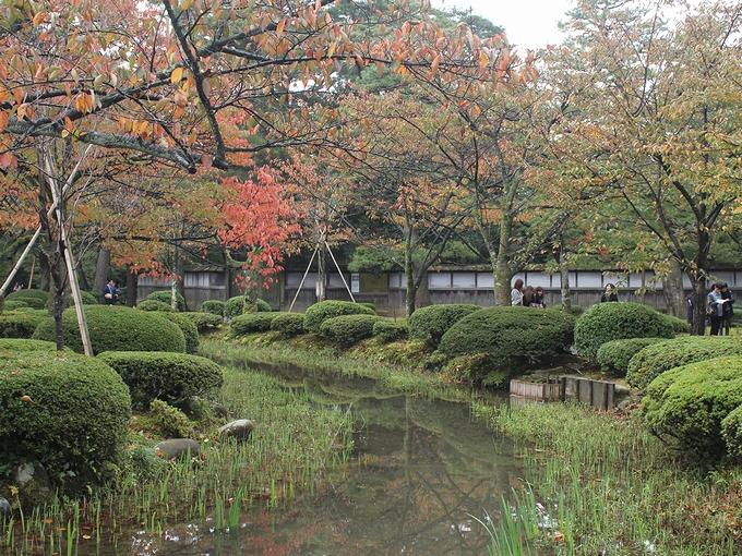 紅葉始まる兼六園 園内の曲水