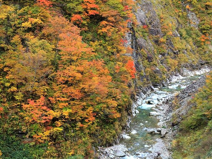 秋の白山スーパー林道 蛇谷の紅葉