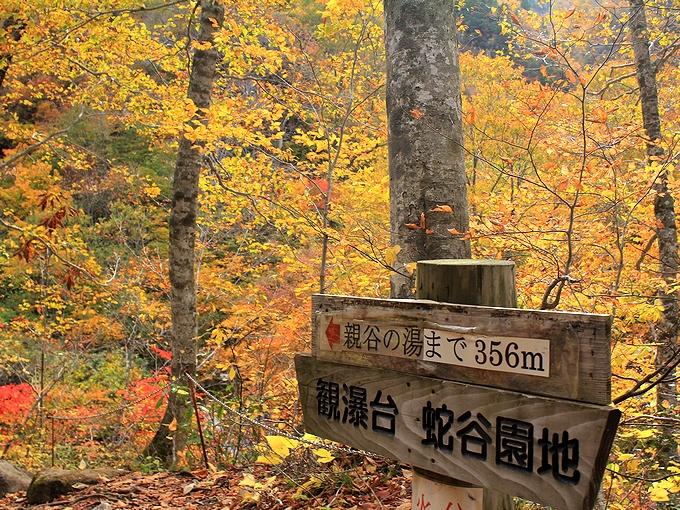 秋の白山スーパー林道 蛇谷園地