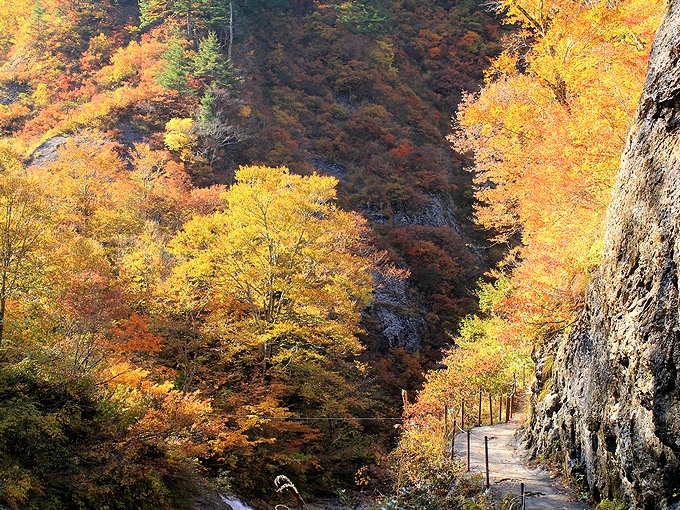 秋の白山スーパー林道 姥が滝へ向かう遊歩道