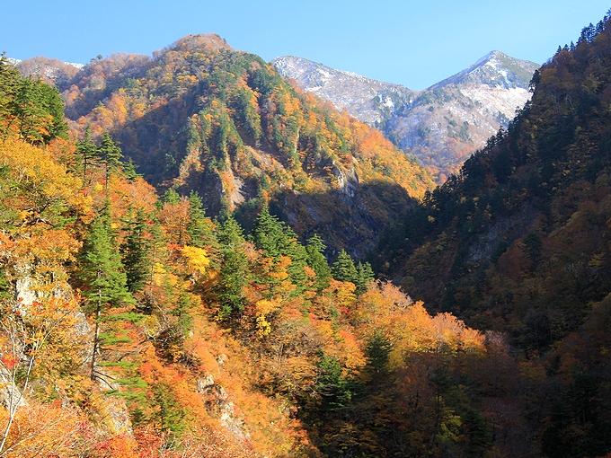 秋の白山スーパー林道 紅葉と雪をいただく山