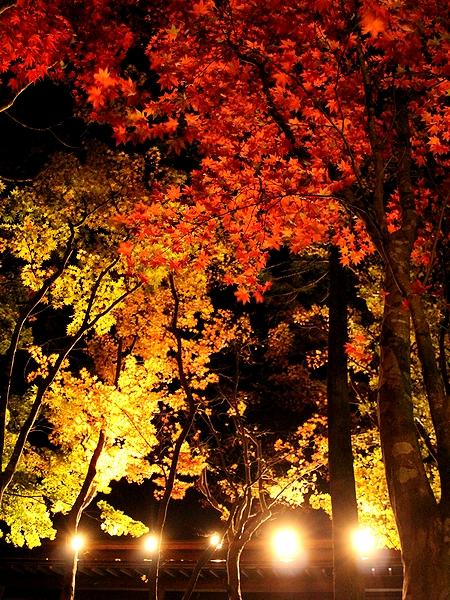 松雲山荘の紅葉ライトアップ